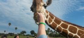 Florida Busch Gardens Tampa
